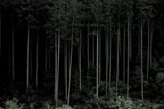 anne-hooss_1_04991